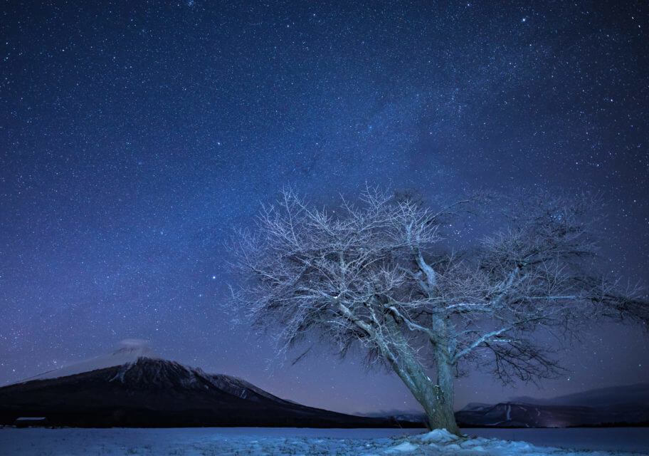上坊牧野一本櫻冬季
